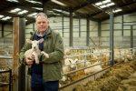 William Watkins with a newborn lamb